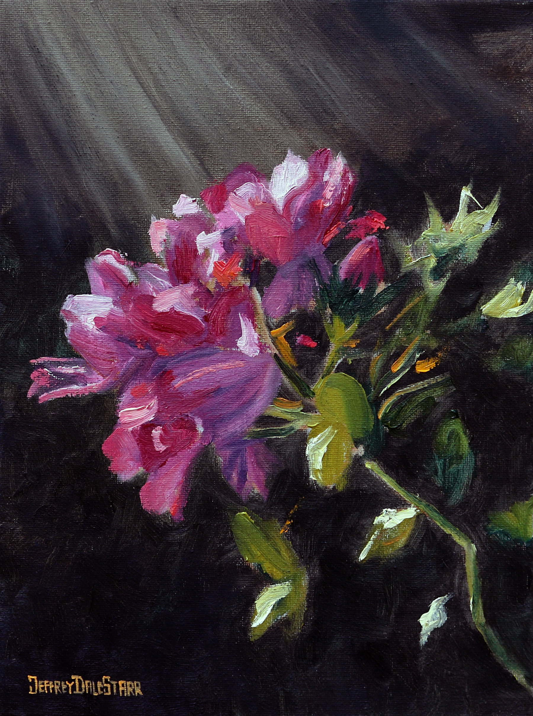 oil painting of knockout roses bathed in sunlight by american artist jeffrey dale starr