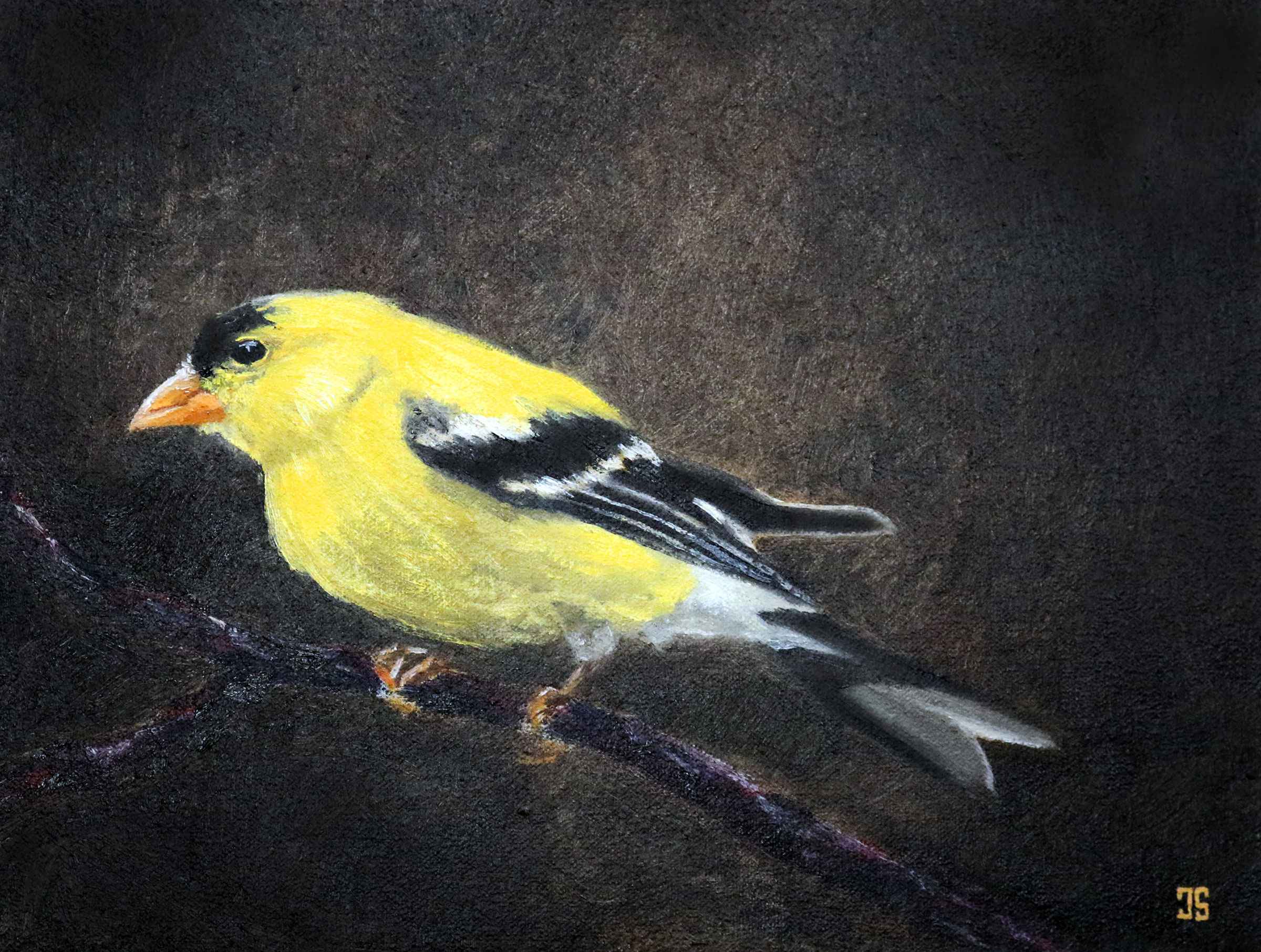 Oil painting of Birds of Cape Cod American Goldfinch by Jeffrey Dale Starr
