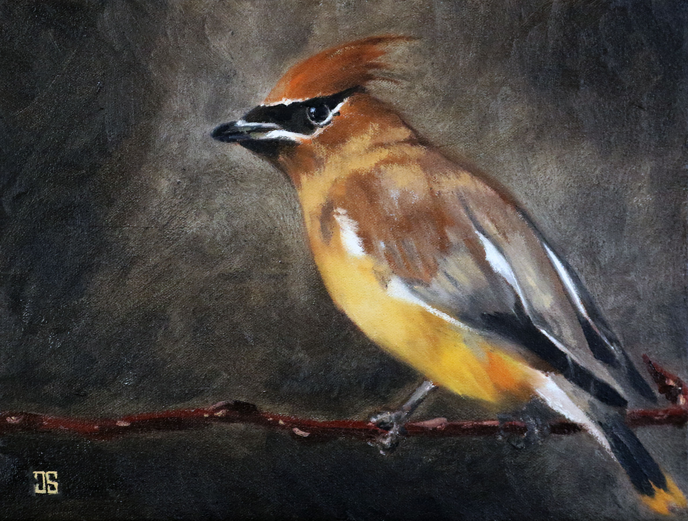 Oil painting of birds of cape cod cedar waxwing by Jeffrey Dale Starr