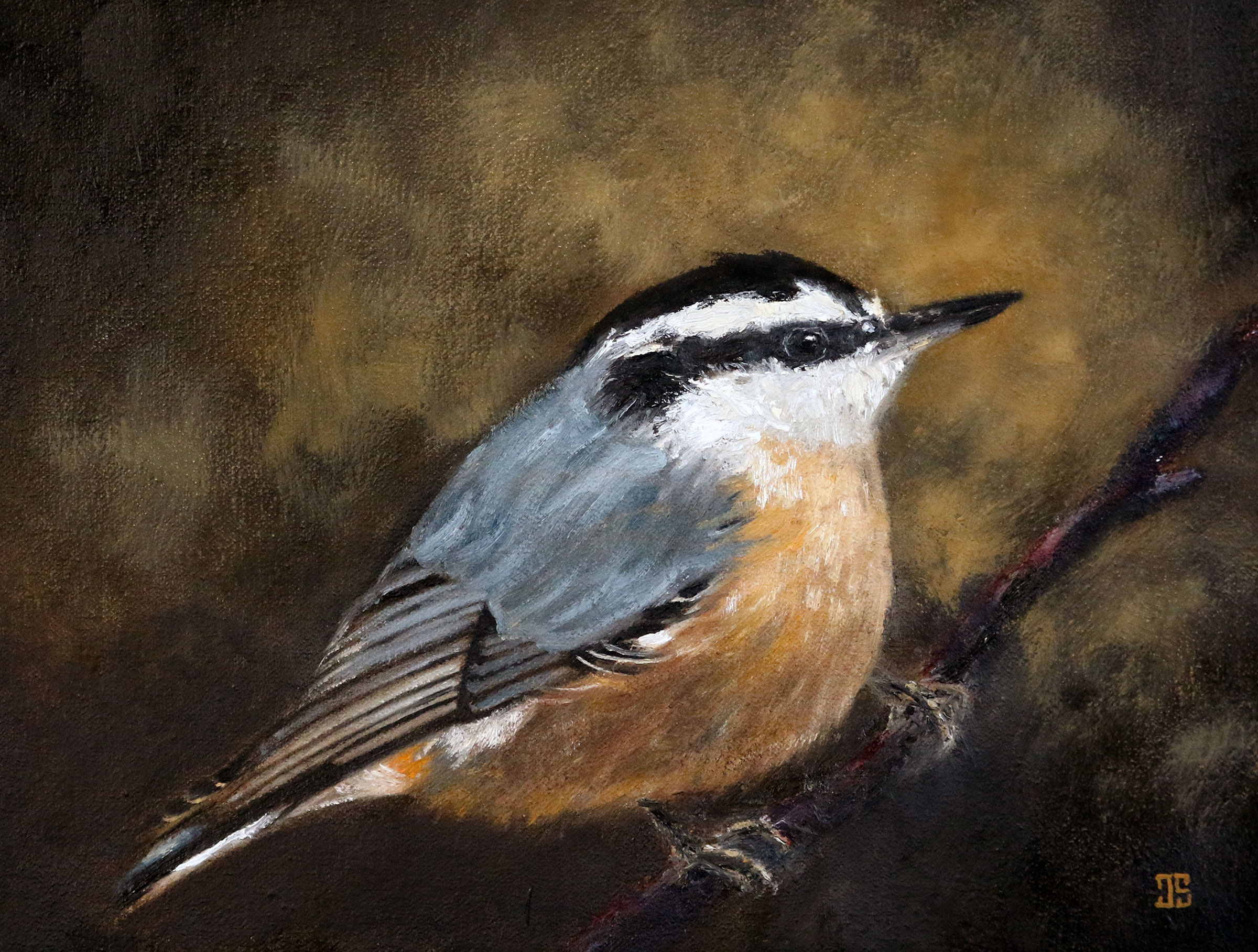 Oil painting of birds of Cape Cod Red Breasted Nuthatch by Jeffrey Dale Starr