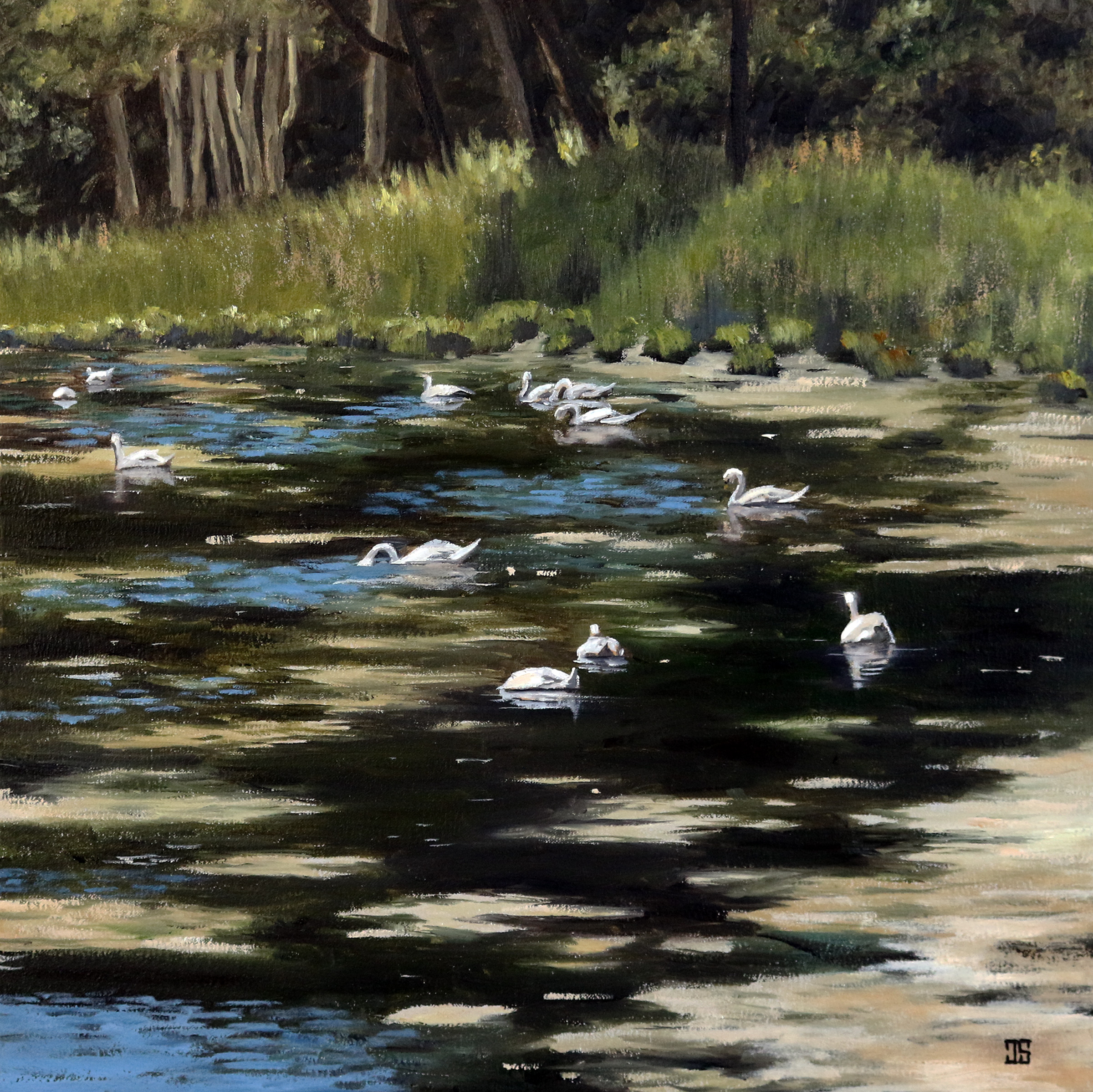 Swans in Cotuit by Jeffrey Dale Starr