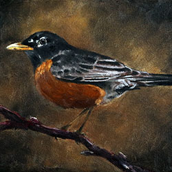 Oil painting of Birds of Cape Cod American Robin by Jeffrey Dale Starr