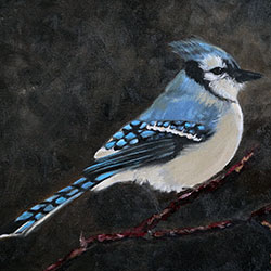 Oil painting of Birds of Cape Cod Blue Jay by Jeffrey Dale Starr
