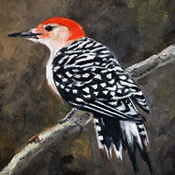 Oil Painting of birds of Cape Cod Red Bellied Woodpecker by Jeffrey Dale Starr