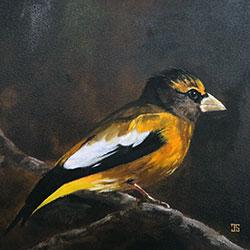 Oil painting of evening grosbeak by American artist Jeffrey Dale Starr