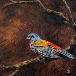 Oil painting of painted bunting by American artist Jeffrey Dale Starr