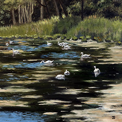 Oil painting of swans in Cotuit Cape Cod by American artist Jeffrey Dale Starr